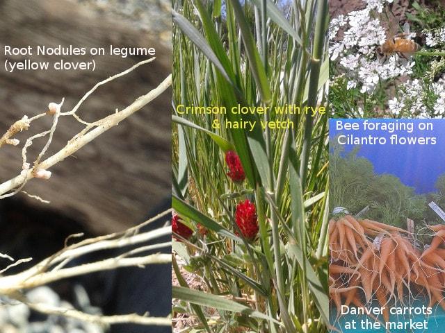 arenoso-farms-2016-pics-min
